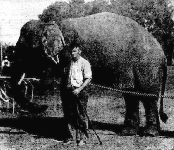 Jumboroo in 1922